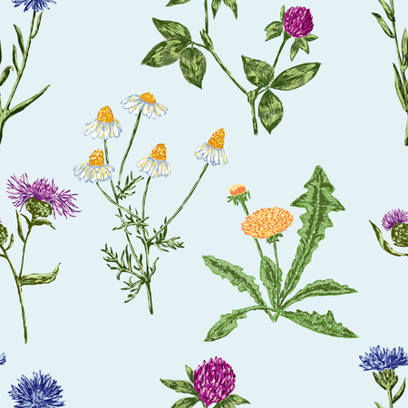 Vector background of the different wildflowers