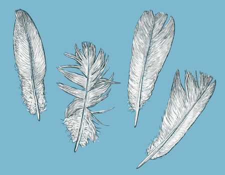 Vector illustration of the white birds feathers