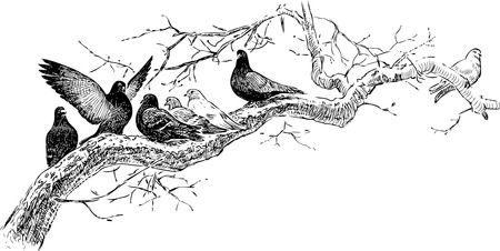 Vector drawing of the pigeons on the tree branch