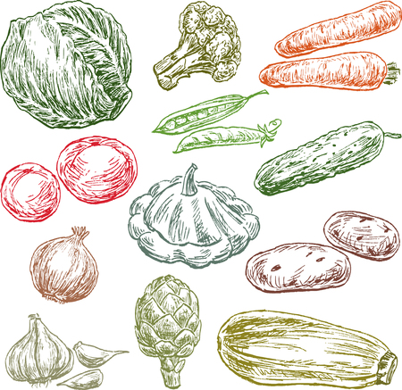 Sketches of the various vegetables