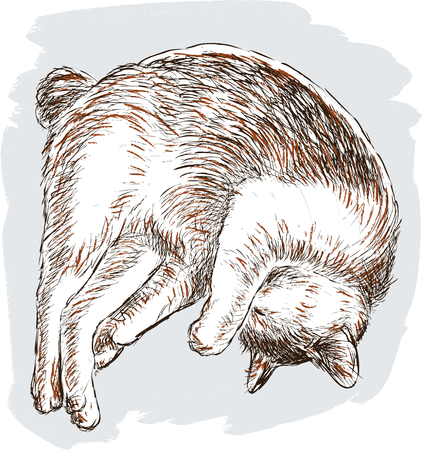 Vector illustration of the sleeping domestic cat