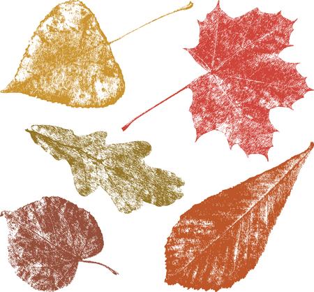 De herfstbladeren van de andere bomen Stock Illustratie