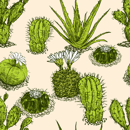 Pattern of the different cactuses