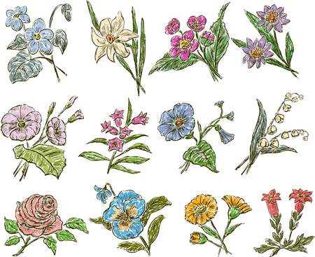 Sketches of the different flowers
