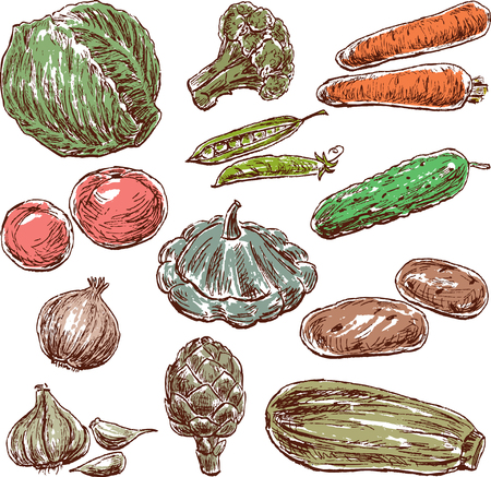 Hand drawings of the vegetables Illustration