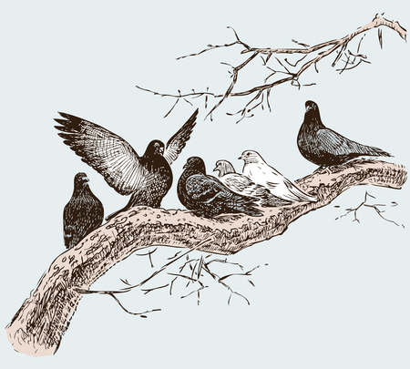 the pigeons on the tree branch in the spring day