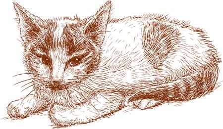 Sketch of a red kitten. Ilustração