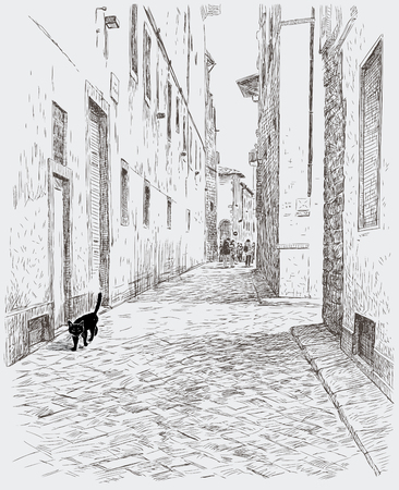 Black kitten walks in cobblestone road.