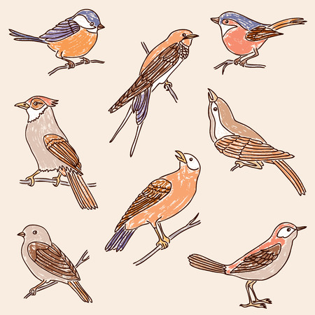 Set of the drawn wild birds, vector illustration.