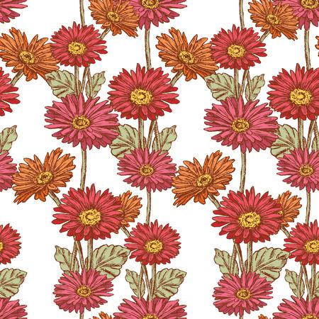 Pattern of the garden gerberas