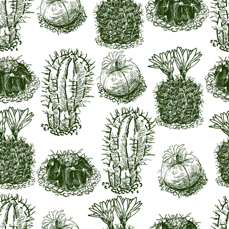 Pattern of the drawn cactuses