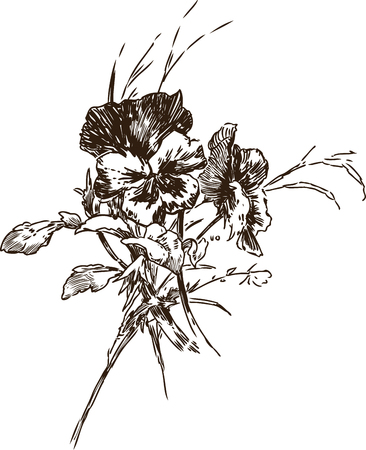 Sketch of a bouquet of pansies