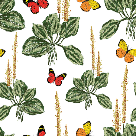 Vector background of plantain and butterflies Ilustração