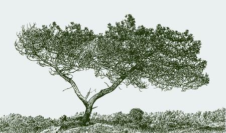 Vector illustration of a silhouette of a pine tree Vektorgrafik
