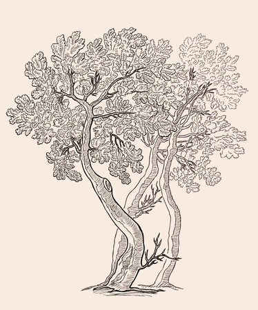Vector illustration of the small oak trees