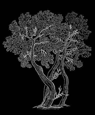 Vector image of decorative oak trees