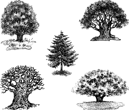 Vector drawings of different trees