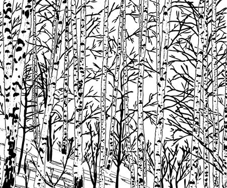 Image vectorielle d'un bosquet de bouleaux pendant la saison froide