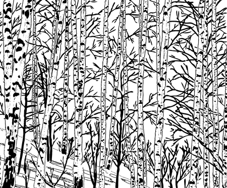 Vector image of a birch grove in the cold season