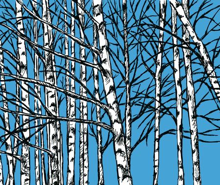 Vector image of a birch grove in the cold season