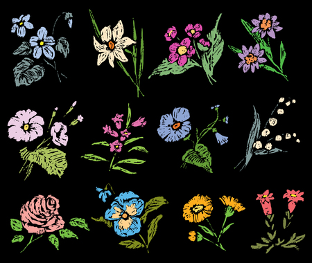 A set of sketches of various flowers