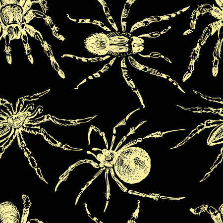 background of sketches of poisonous spiders