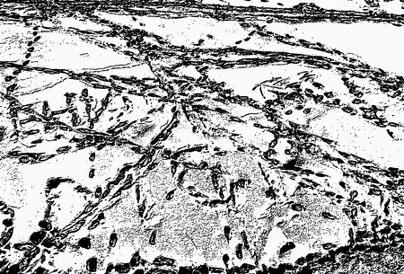 Vector image of human footprints in the snow