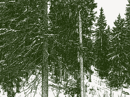 Vector image of spruce forest in winter Ilustracja