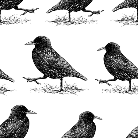 Seamless background of striding starlings