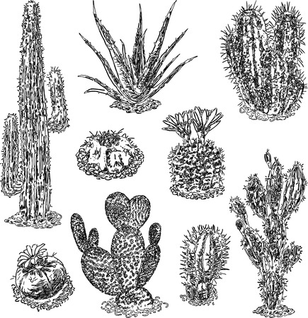 A set of various drawn cactuses