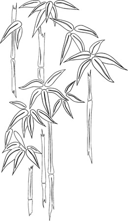 Contour drawing of tropical bamboo