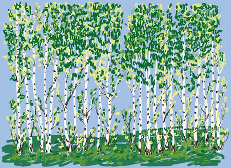 Vector illustration of birch grove in summer