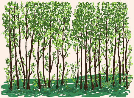 Vector illustration of young deciduous trees in spring Ilustracja