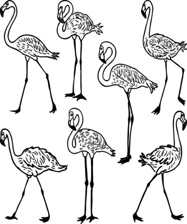 A set of outlines of cartoon flamingos  イラスト・ベクター素材
