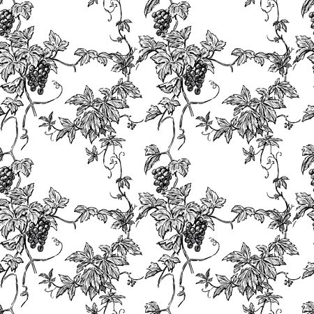 Seamless pattern of sketches vine branches with ripe grape bunches