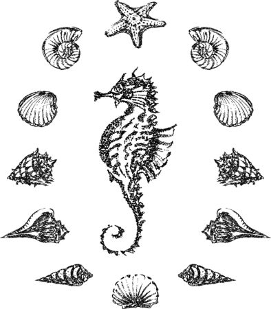 Vector image of outlines various sea shells around seahorse