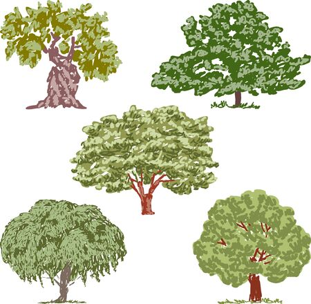 Vector image of various deciduous trees sketches