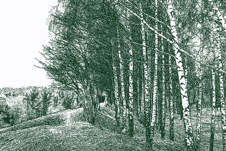 Vector image of countryside landscape with birch grove in early spring