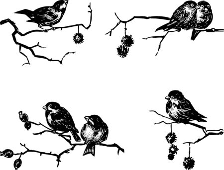 Sketches of sparrows sitting on tree branches on winter day