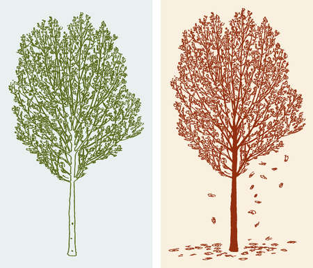 Vector image of deciduous trees in spring and in autumn  イラスト・ベクター素材