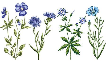 Vector image of set various drawn blue wildflowers