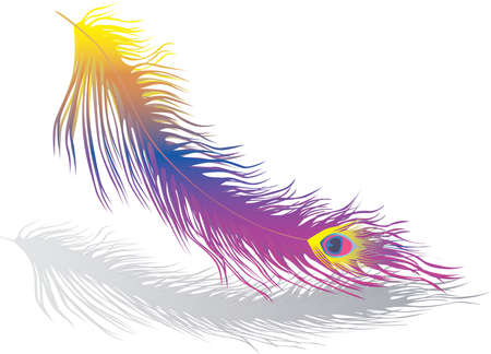 Vector image of colorful bird feather