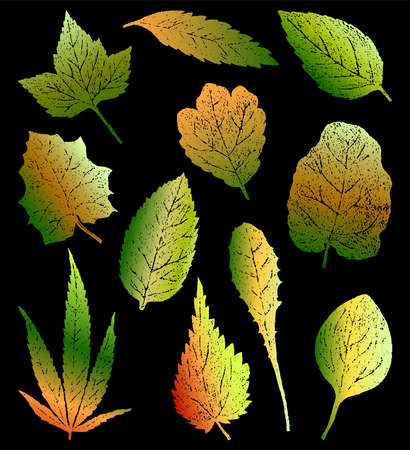 Vector drawing of colorful silhouettes leaves of different plants