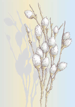 Vector image of sketch pussy willow branch with fluffy buds