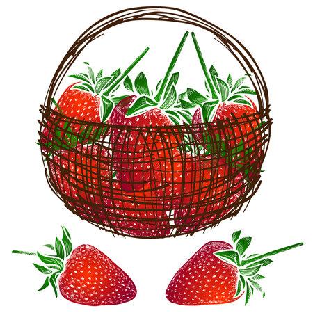Vector image of red juicy ripe strawberries in basket