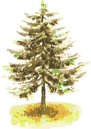 Vector watercolor illustration of fir tree in autumn Illusztráció