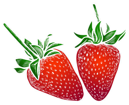 Vector image of drawn decorative red ripe strawberries