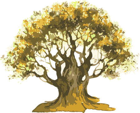 Vector watercolor drawing of old oak tree in autumn