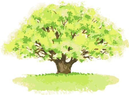 Vector watercolor image of old oak tree in summer