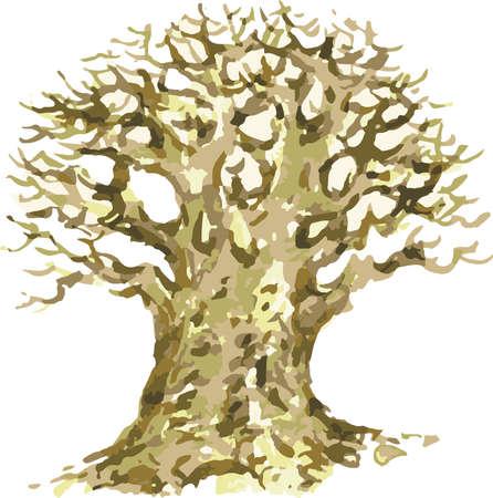 Vector watercolor illustration of old oak tree in winter